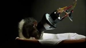 La Vie rêvée des rats